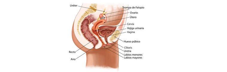 Que es la citologia uretral