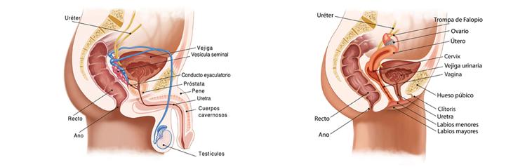 meato y prostatitis